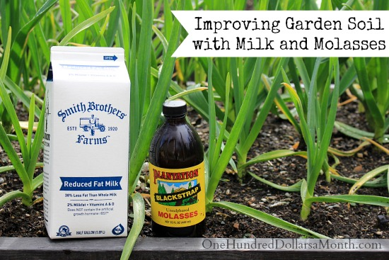Improving Garden Soil with Milk and Molasses - One Hundred