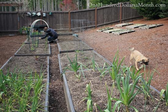raised garden beds seattle garden