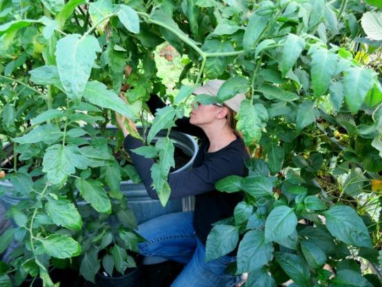 mavis-butterfield-greenhouse-gardening-