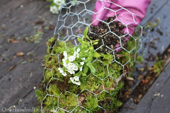 moss lined hanging basket cone shaped