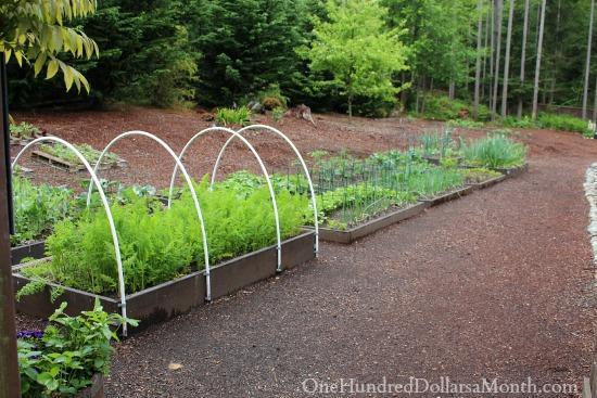seattle backyard garden