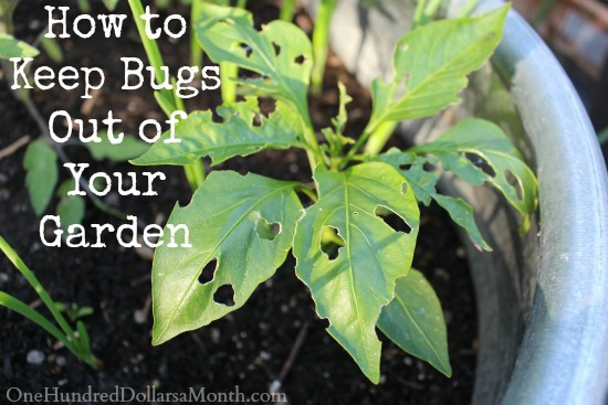 How To Keep Bugs Out Of Your Garden One Hundred Dollars A Month