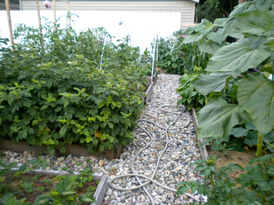 Garden pictures July 2014 022