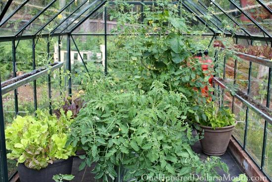 inside glass greenhouse