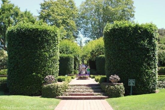 large boxwood hedges