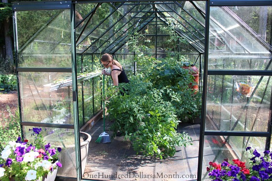 seattle greenhouse garden