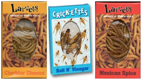 eating crickets