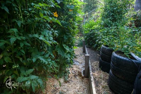 growing vegetables in tires