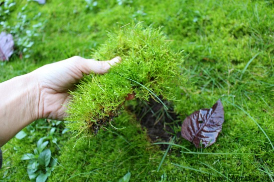 grass full of moss