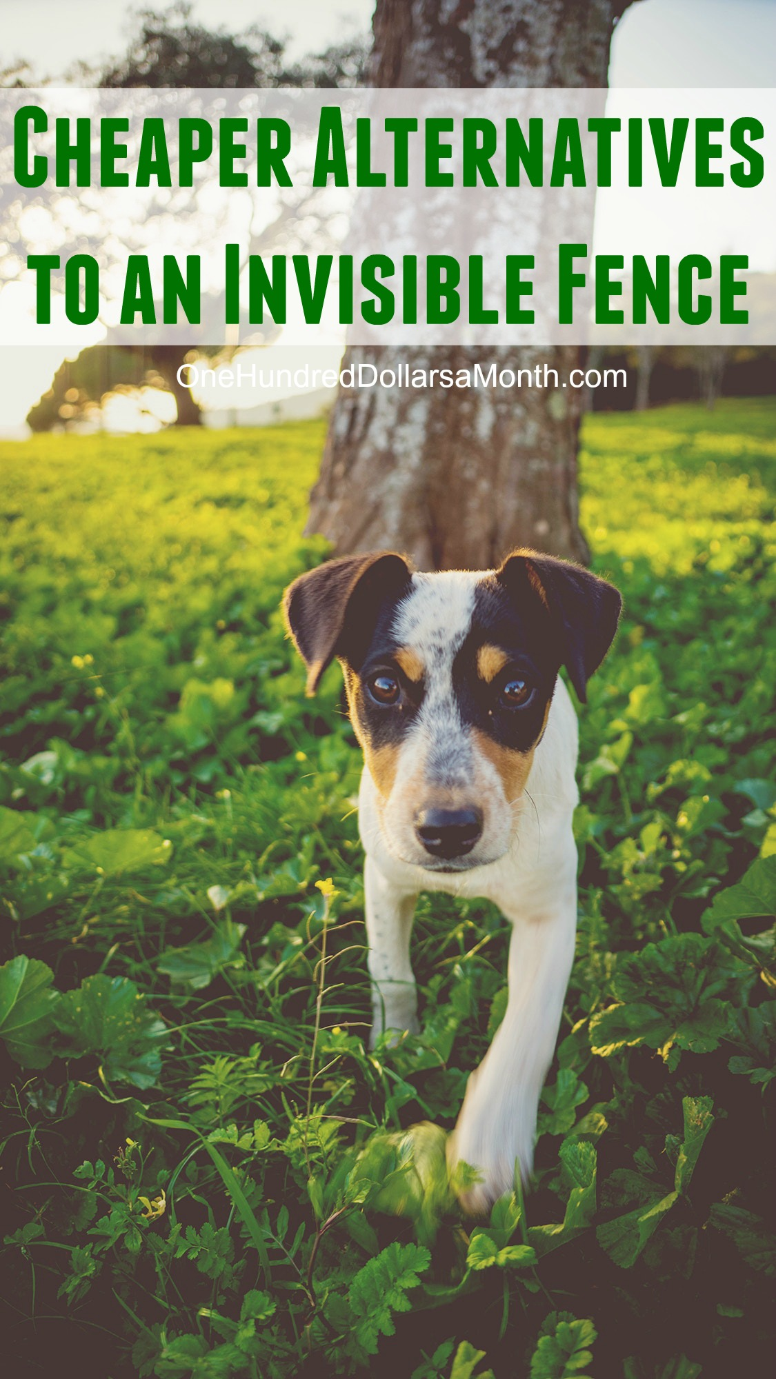 what are the cheaper alternatives to invisible fence one