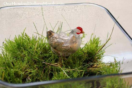 chicken in grass