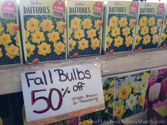 Spring bulbs 50 off at the home depot one hundred dollars a month fall bulbs on sale mightylinksfo