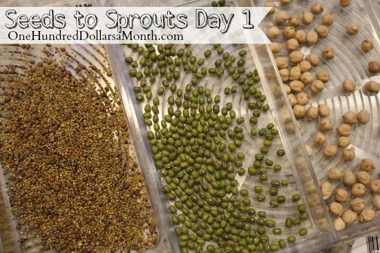 growing sprouts at home