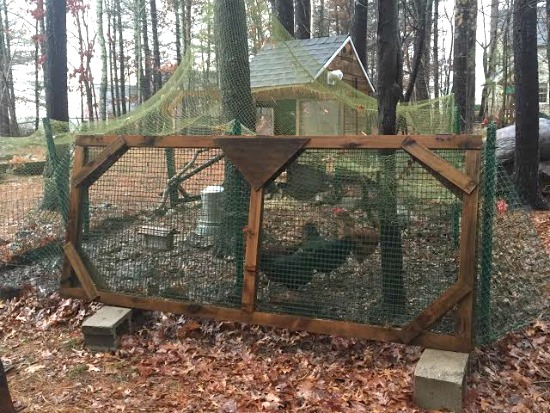 netting over chicken coop