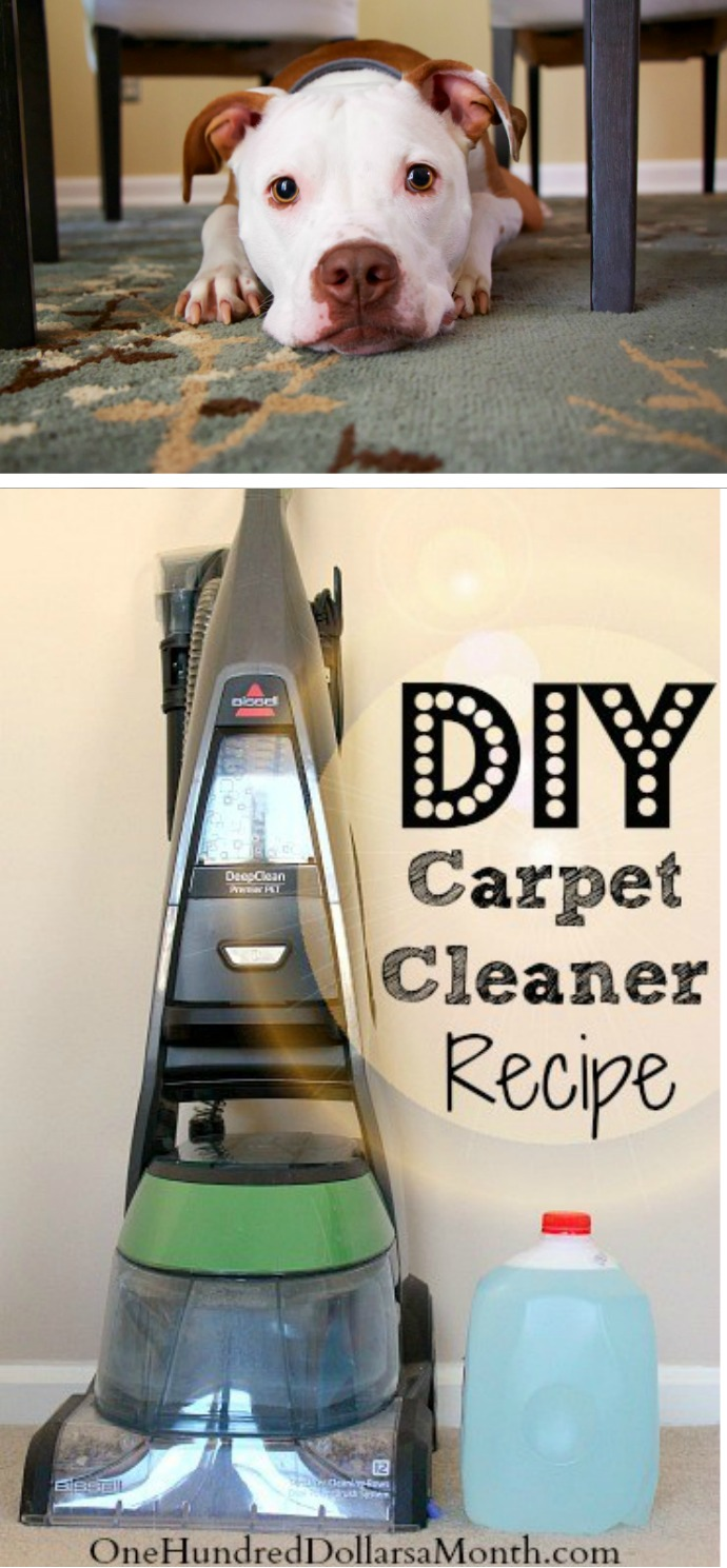Tips for steam cleaning carpets my favorite diy carpet cleaner tips for steam cleaning carpets my favorite diy carpet cleaner recipe solutioingenieria Images