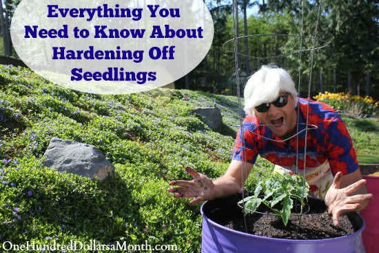 Everything You Need to Know About Hardening Off Seedlings