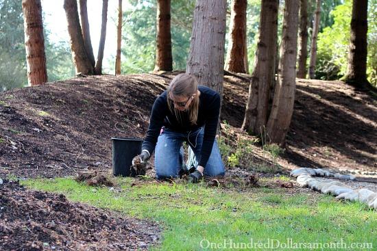 mavis buttefield gardening