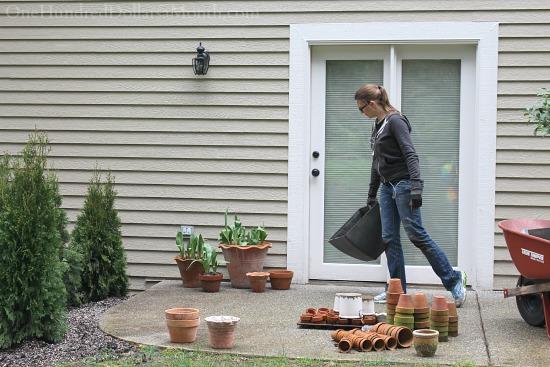 Mavis Butterfield   Backyard Garden Plot Pictures 3/22/15