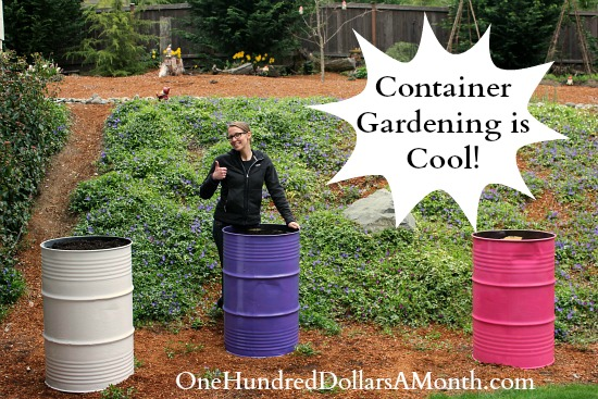 container-gardening-steel-drums1