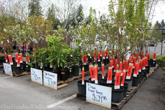 Sweet Deals at the Home Depot Plant and Garden Sale - One