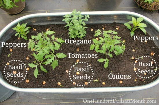 how-to-plant-a-pizza-garden