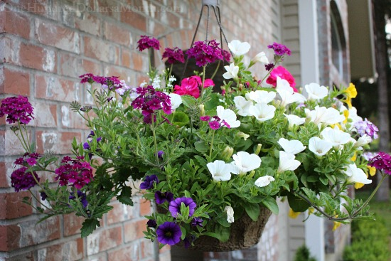 Youtube Hanging Flower Baskets : Mavis butterfield backyard garden plot pictures