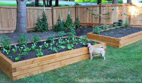 how to build above ground vegetable garden boxes