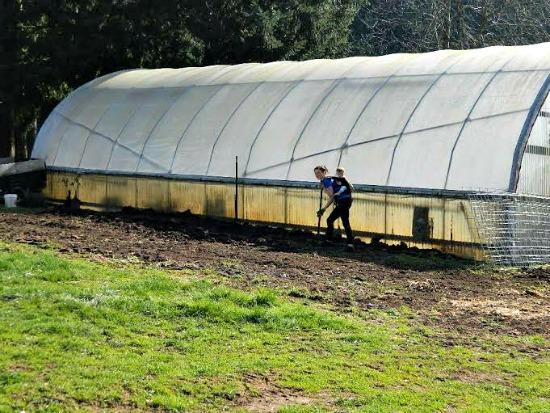 Abigail farm pictures12