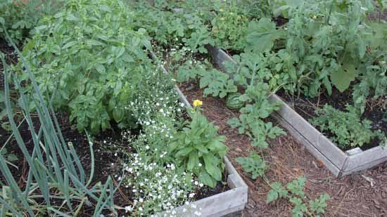 Caroline garden pics