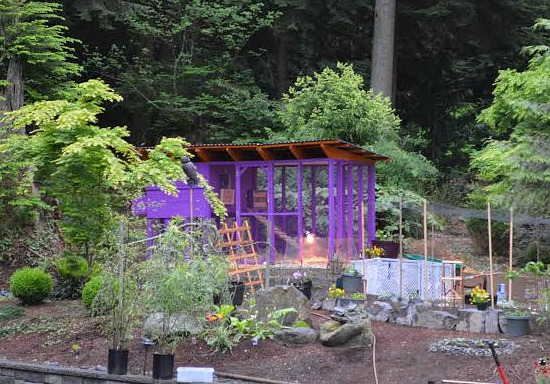 purple chicken coop
