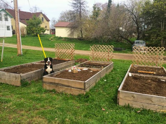 raised garden boxes