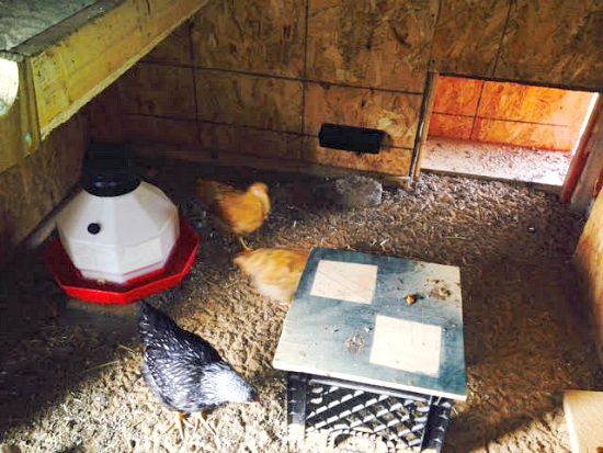 chicken coop feeder and bedding