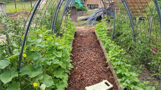 garden trellis design for cucumbers