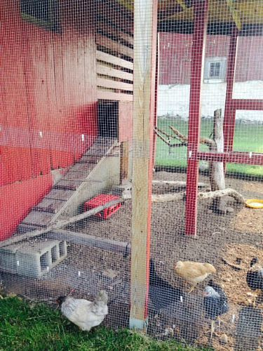 pictures of chicken coops