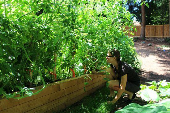 raised garden bed boxes made from douglass fir
