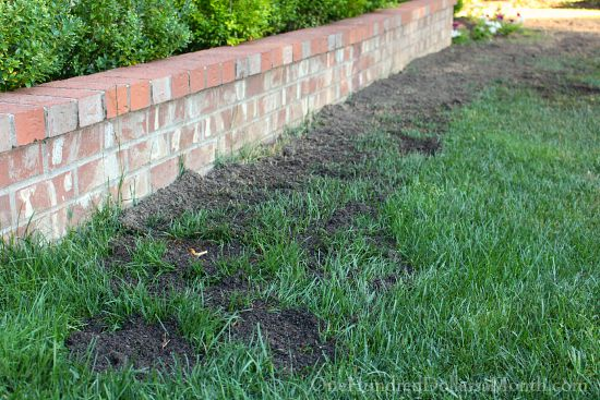 reseeding lawn grass seed