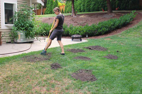 tagro reseeding lawn
