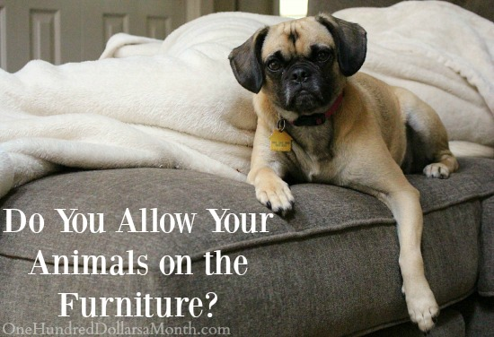 Do You Allow Your Animals on the Furniture