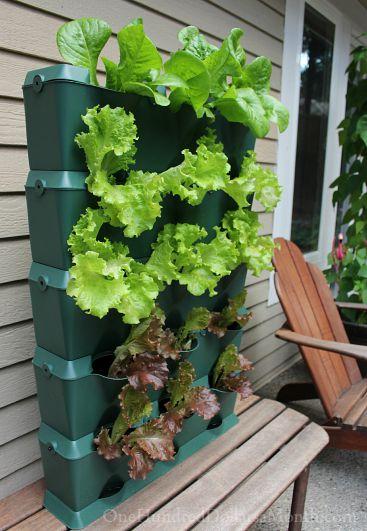 mini garden vertical planter