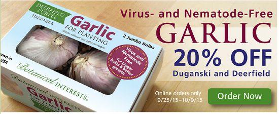 order garlic bulbs online