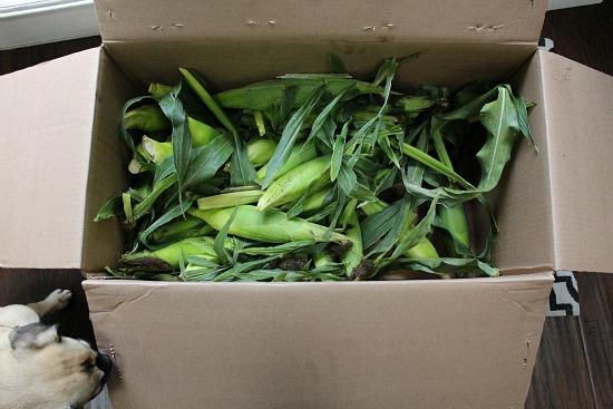 box of corn