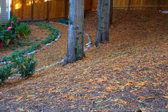 cedar tree shedding