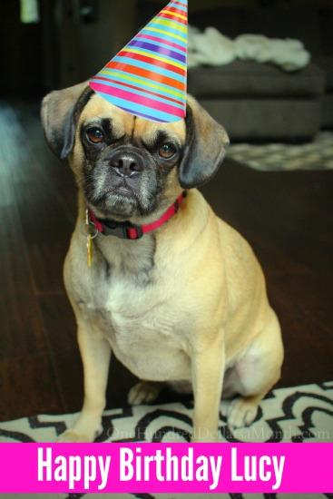 lucy birthday