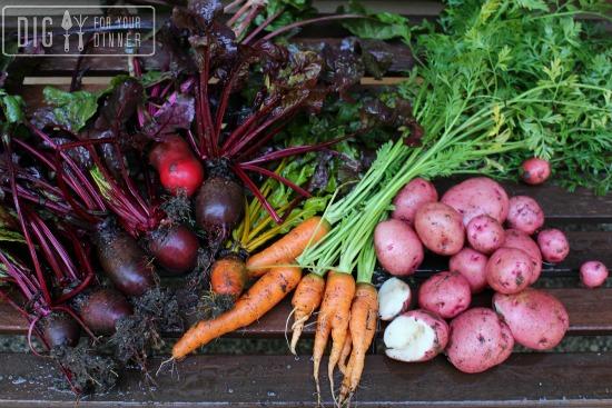 kitchen garden photos