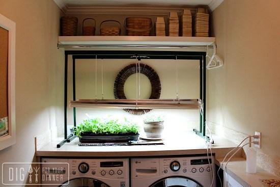 using-grow-lights-to-start-seedlings