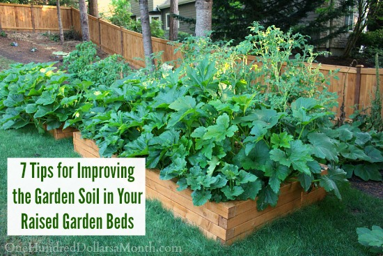 7 Tips For Improving The Garden Soil In Your Raised Garden Beds   One  Hundred Dollars A Month