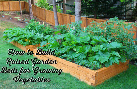 How to build raised garden beds for growing vegetables for Building a raised garden