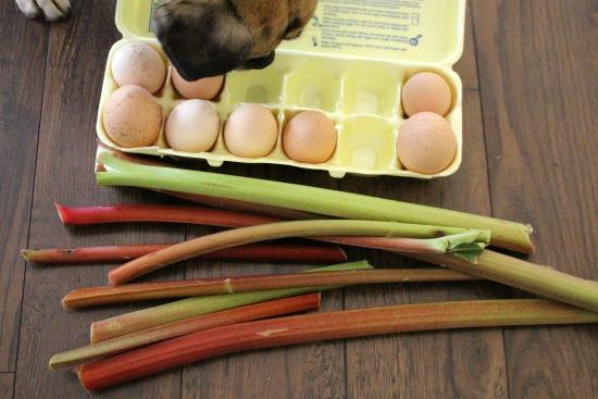 eggs rhubarb