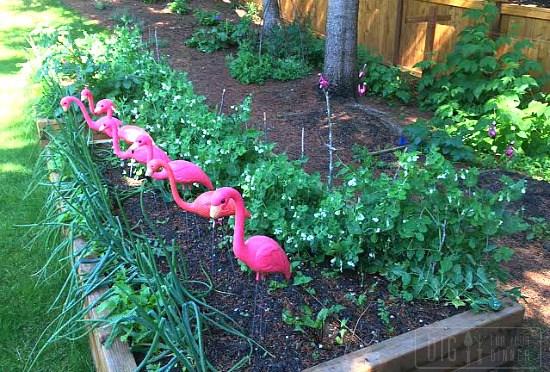 growing-onions-in-raised-garden-beds-1