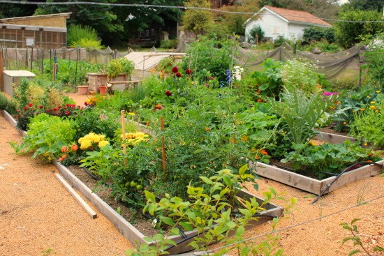 Wilkinson Farm Community Garden